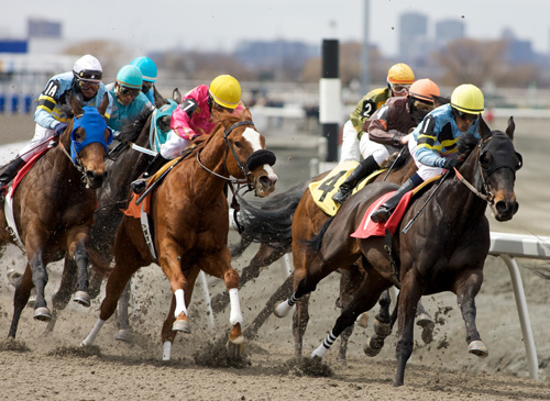 Research Aims to Make Racetracks Safer for Horses | U of G News