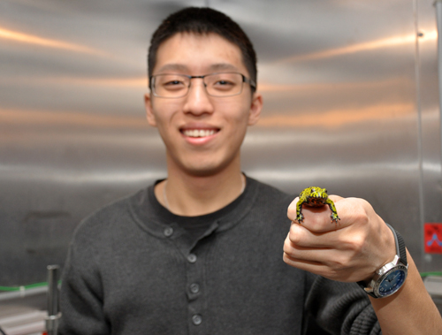 Eric To holds a fire-bellied toad.