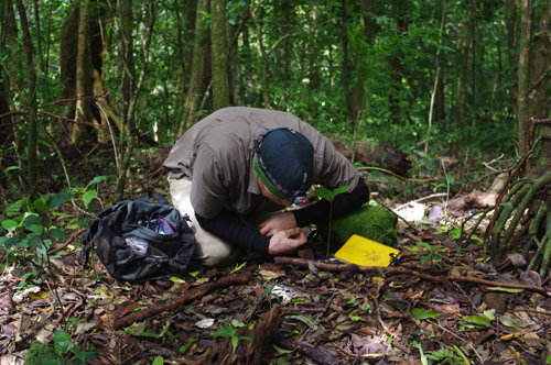 Prof. Alex Smith gets a close-up look at his research subjects in Costa Rica's volcanic mountains. Photo by Greg Meredith
