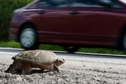 Making Ontario a Safer Place for Turtles