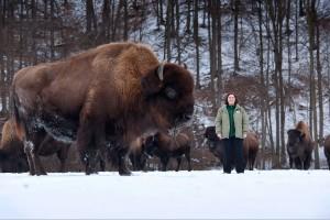 Guelph professor Gabriela Mastromonaco hopes to preserve bison in Canada.