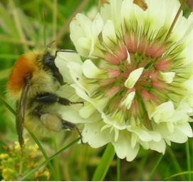 Researchers found low levels of pesticides can affect the foraging behaviour of bumblebees.