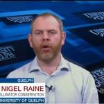Nigel_Raine-BNN