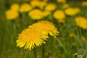 Win the War Against Weeds
