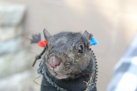 Squirrel_Stothart-study-1