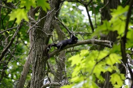 Squirrel_Stothart-study-3