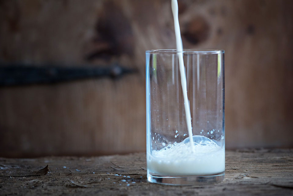 Research Aims to Reduce Iodine Levels in Milk | U of G News