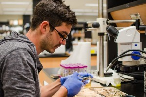Lead author Nick Edmunds analyzed fish brain size in the lab