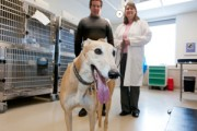 Studying Lymphoma in Dogs Benefits Human Cancer Research