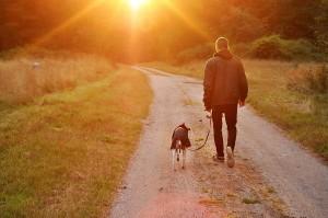 Man walking with dog at sunset