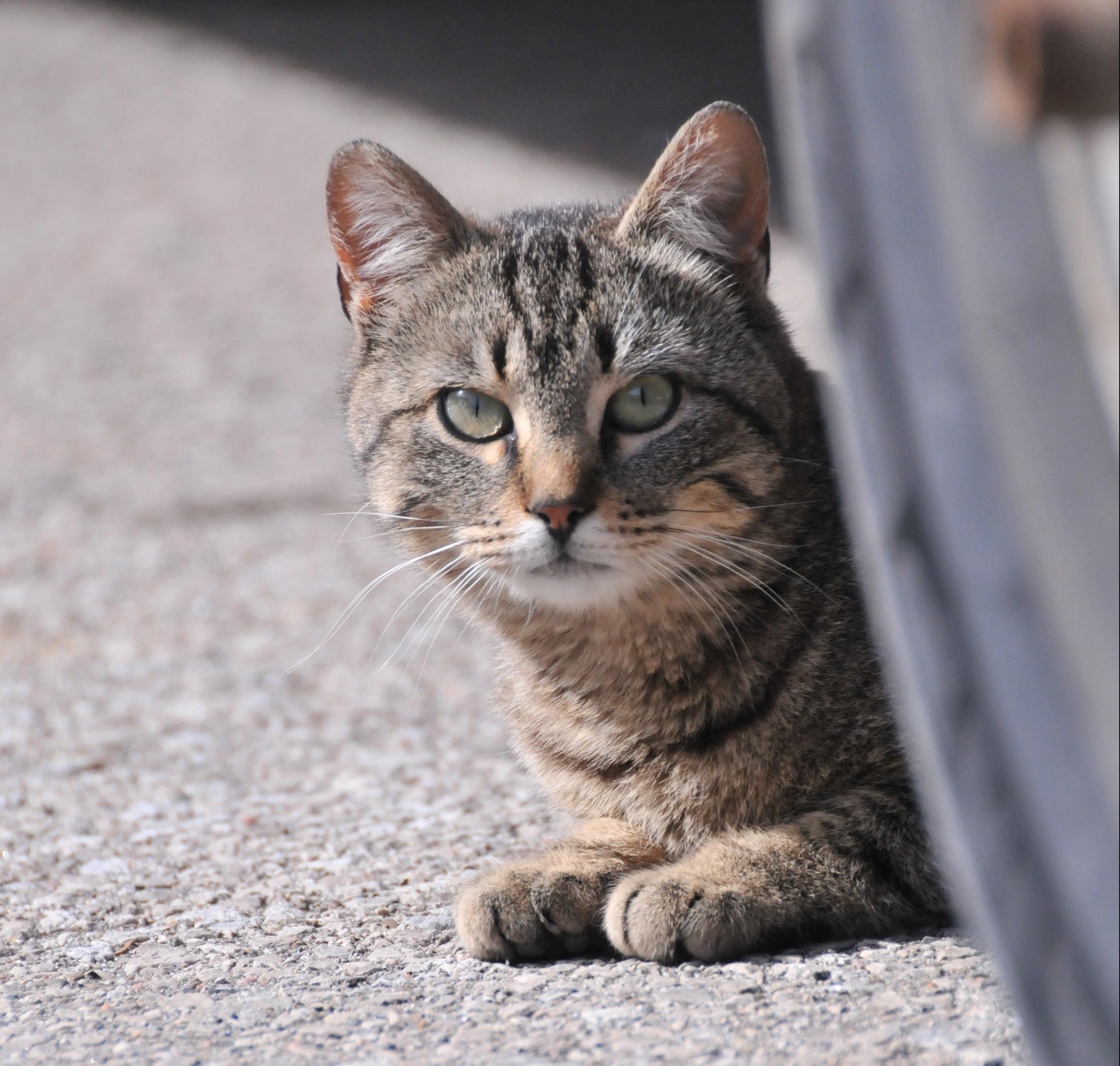 Thirsty Cats   Sabino Veterinary Care