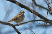 Birds Not Expert Navigators, U of G Study Finds
