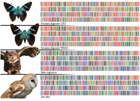 yr_barcodes-for-life_fig-1