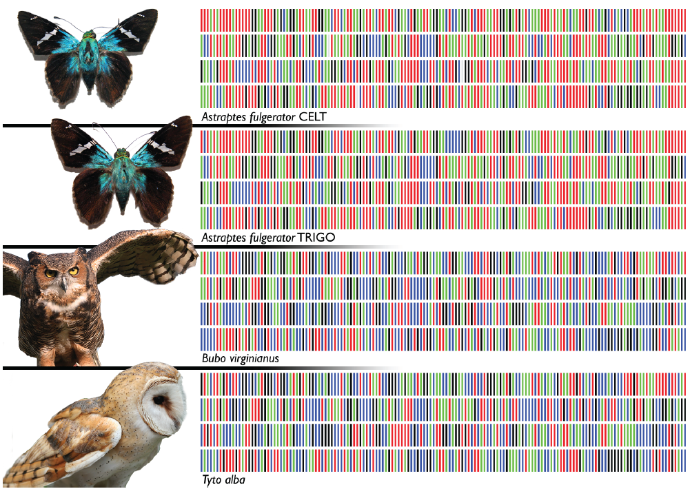 dna barcoding thesis