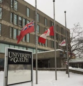 University of Guelph flags at half mast