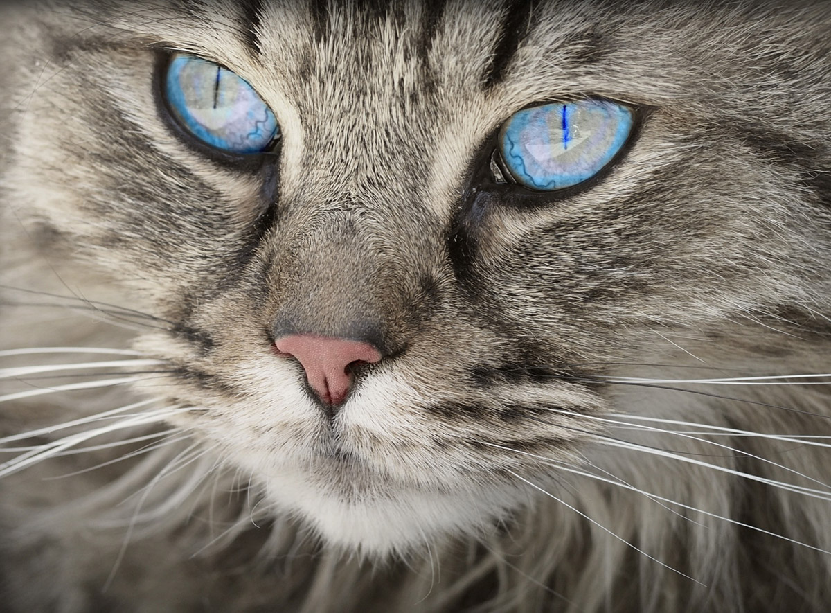 Unviersity of Guelph researchers are finding out how well people know their cats.