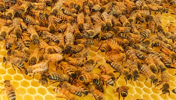 Correctly Used Neonics Do Not Adversely Affect Honeybee Colonies, New Research Finds