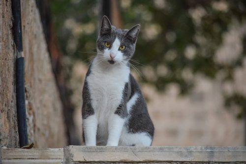 grey and white cat on street