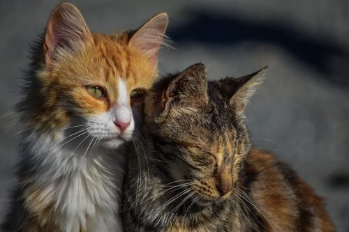two cats - one orange and white and one brown tabby nestled together