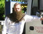 Paul Kelly in a beekeeping suit, his neck covered in bees
