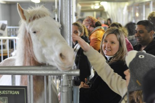 Woman petting a white horse in its stall