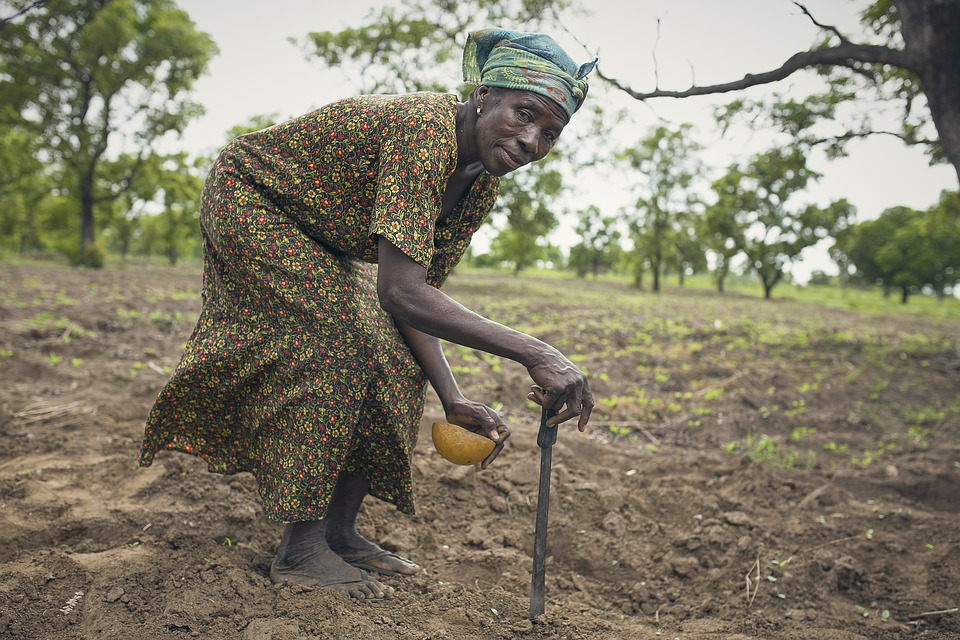 Rural African woman crouches down as she plants seeds in the dirt
