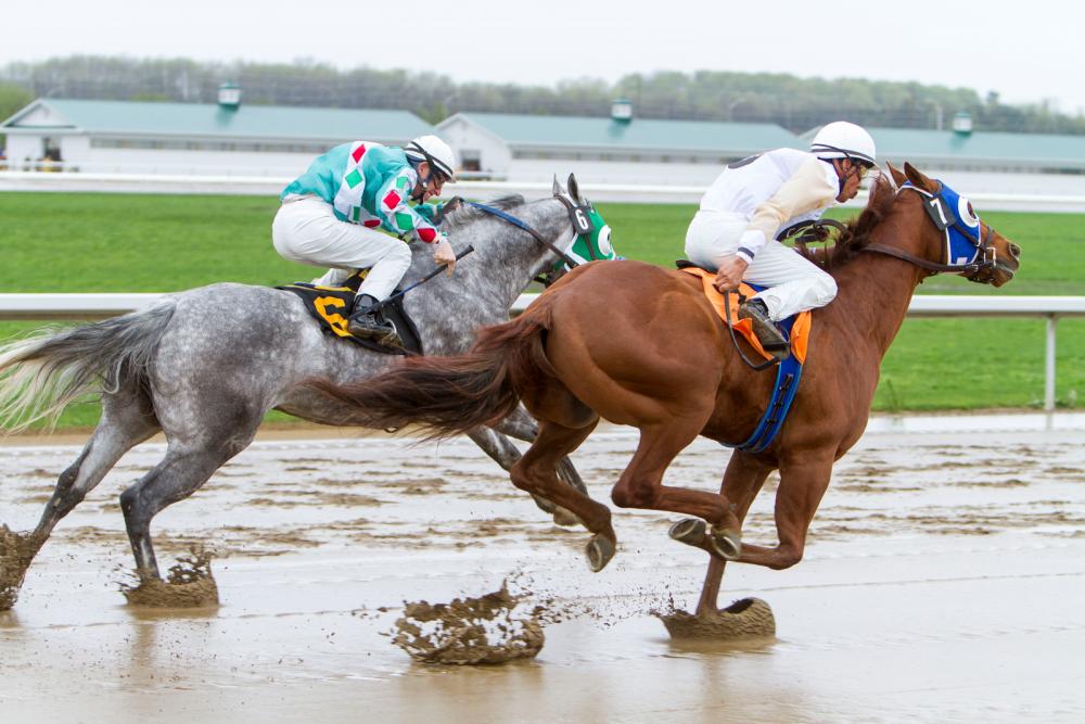 Quarterhorses racing