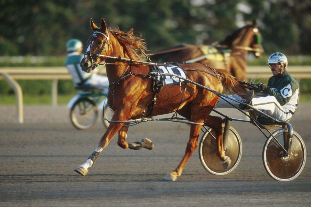 standardbreds racing