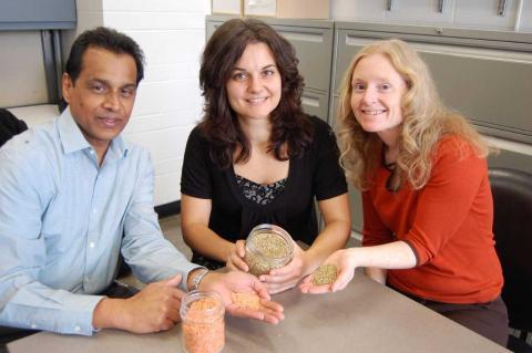 photo of Dan Ramdath, Dita Morvek and Alison Duncan holding lentils in their hands