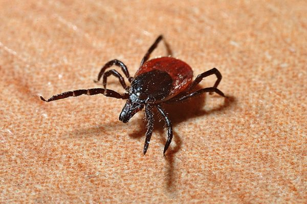 U of G Study Reveals Complexity of Lyme Disease and Knowledge Gaps