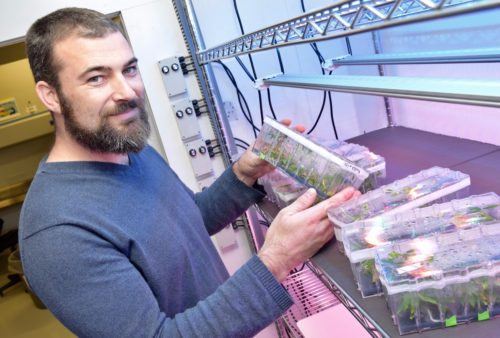 photo of Prof. Max Jones holding cannabis seedlings