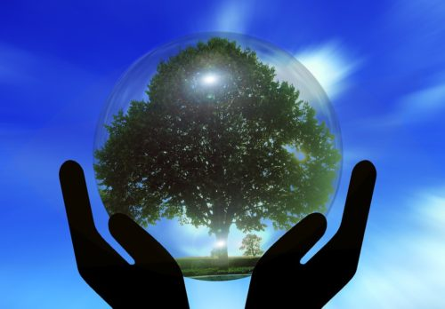 hands holding glass globe with tree inside up to sky