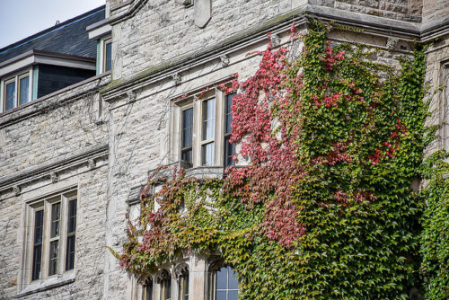 Johnston Hall ivy