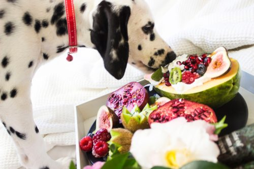 a photo of a dog with a tray of fruit and cream