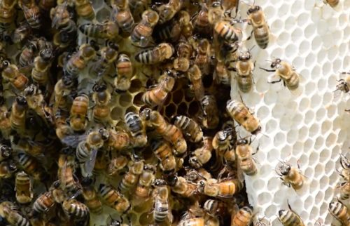 a photo of bees in a hive