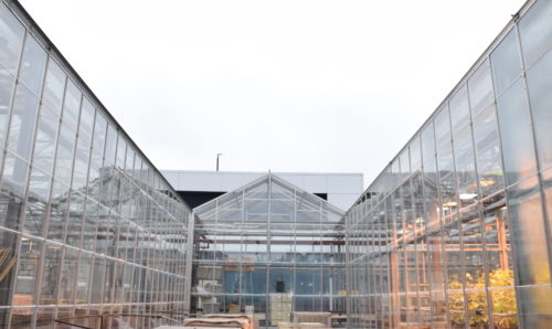 Outside view of steal and glass greenhouses