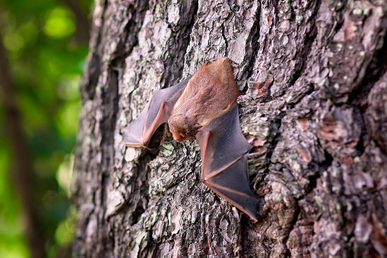 A bat hanging on a tree's bark