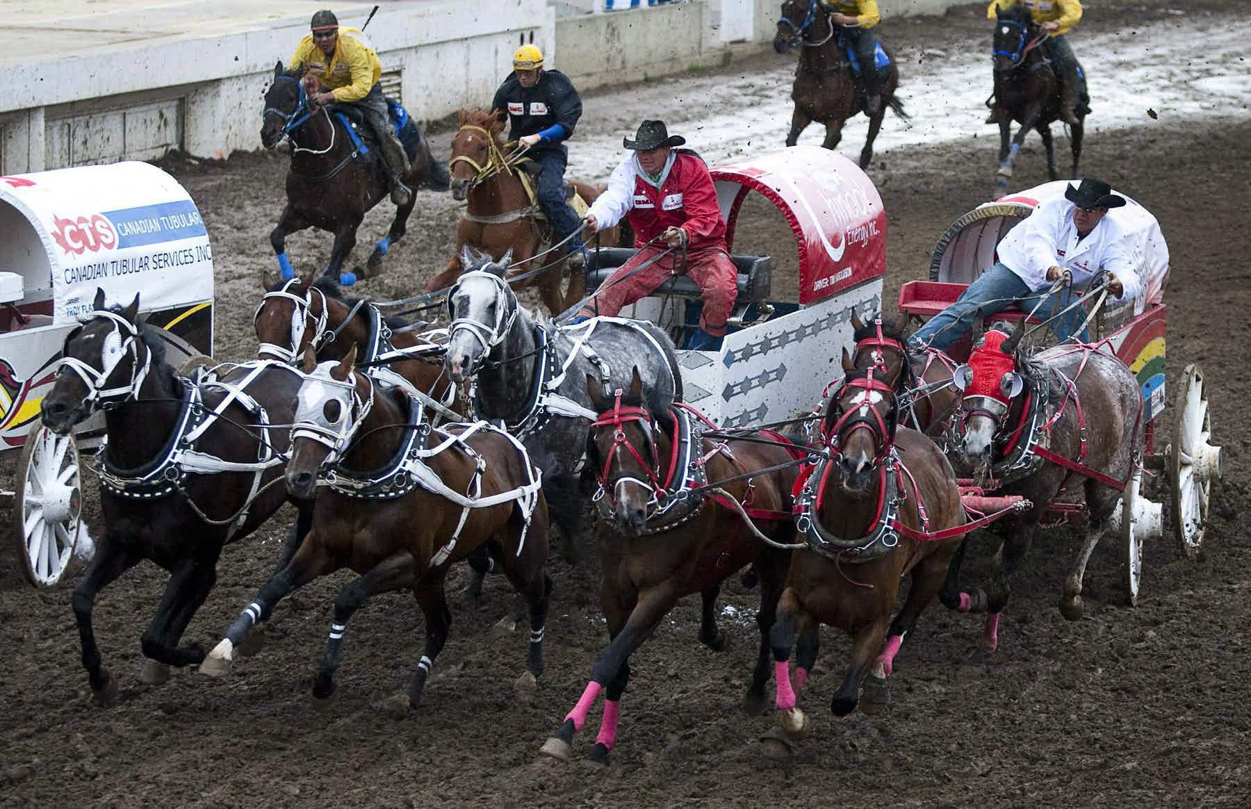 Driver Rae Croteau Jr. guides his team around the second barrel during chuckwagon racing action at the Calgary Stampede