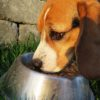 Expert Offers Tips to Feeding Your Dog a Nutritious Diet