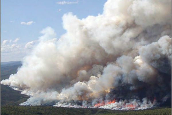 Frequent, Extreme Wildfires Threaten to Turn Boreal Forests from Carbon Sinks to Carbon Sources, Study Reveals