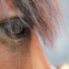 HorsesBlink Less, Twitch Eyelids MoreWhen Stressed, U of G Researchers Find