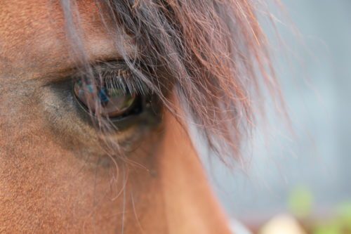 This photo shows a close-up of a horse's eye