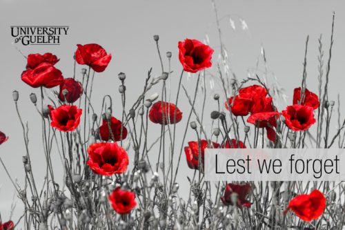 """field of poppies with """"Lest We Forget"""" text"""