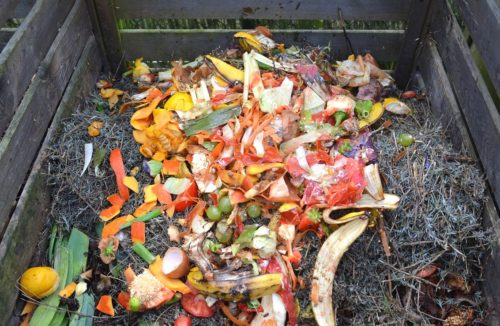 A compost bin with food waste.