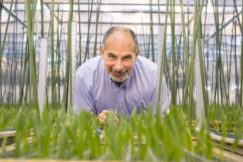 Smiling man surrounded by plants in a lab