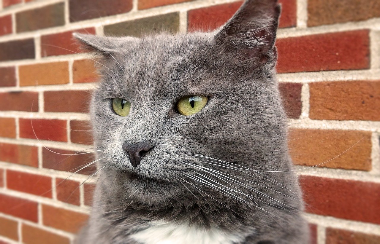 A cat looking displeased is shown