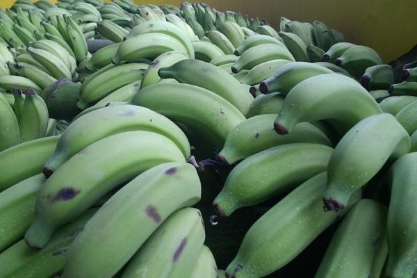 Baking with Banana Flour Reduces Glucose Absorption, U of G Study Finds