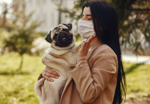 A woman wears a surgical mask while holding a pug