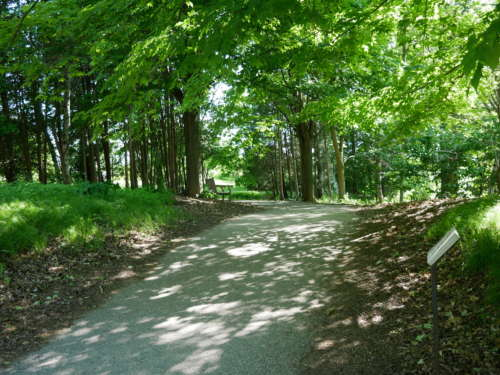 Tree-lined path in U of G's The Arboretum