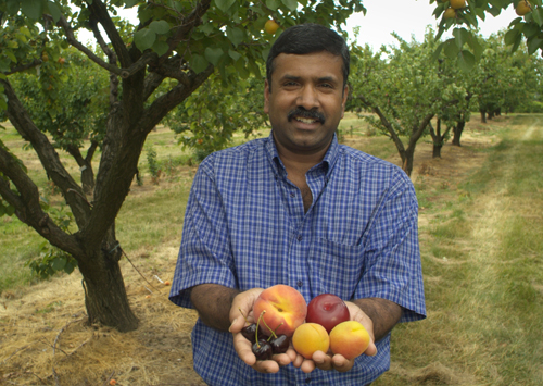 Dr. Jay Subramanian stands ina fruit orchard and holds out a handful of peaches, plums and cherries